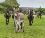 The Donkey Sanctuary in Sidmouth 17 miles from holiday cottage