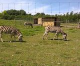 Axe Valley Wildlife Park 6 miles away from the holiday cottage